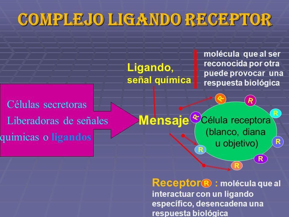 Complejo ligando receptor RECEPTOR Células secretoras Liberadoras de señales quimicas o ligandos Célula receptora (blanco, diana u objetivo) Mensaje R R R R R R R R molécula que al ser reconocida por otra puede provocar una respuesta biológica Ligando, señal química Receptor : molécula que al interactuar con un ligando específico, desencadena una respuesta biológica R