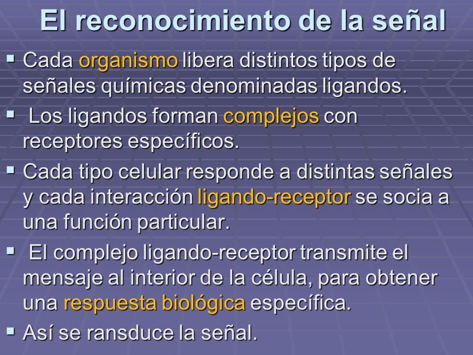 El reconocimiento de la señal Cada organismo libera distintos tipos de señales químicas denominadas ligandos. Cada organismo libera distintos tipos de
