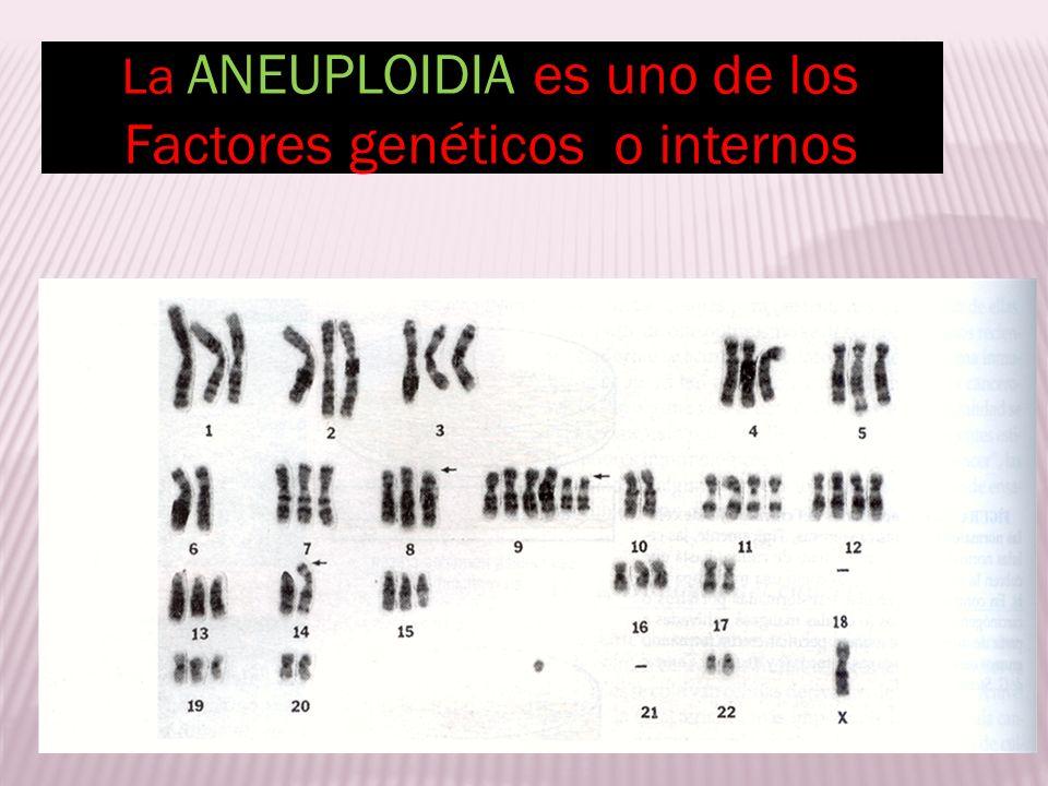 La ANEUPLOIDIA es uno de los Factores genéticos o internos