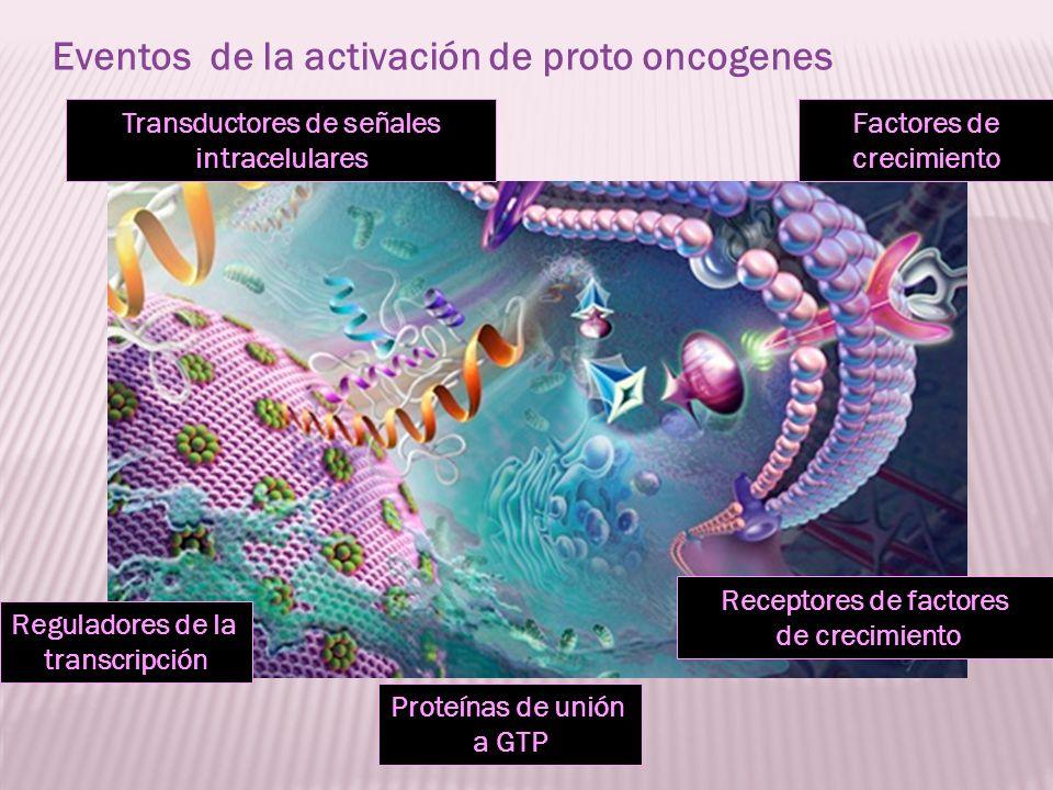 Factores de crecimiento Proteínas de unión a GTP Receptores de factores de crecimiento Transductores de señales intracelulares Reguladores de la trans