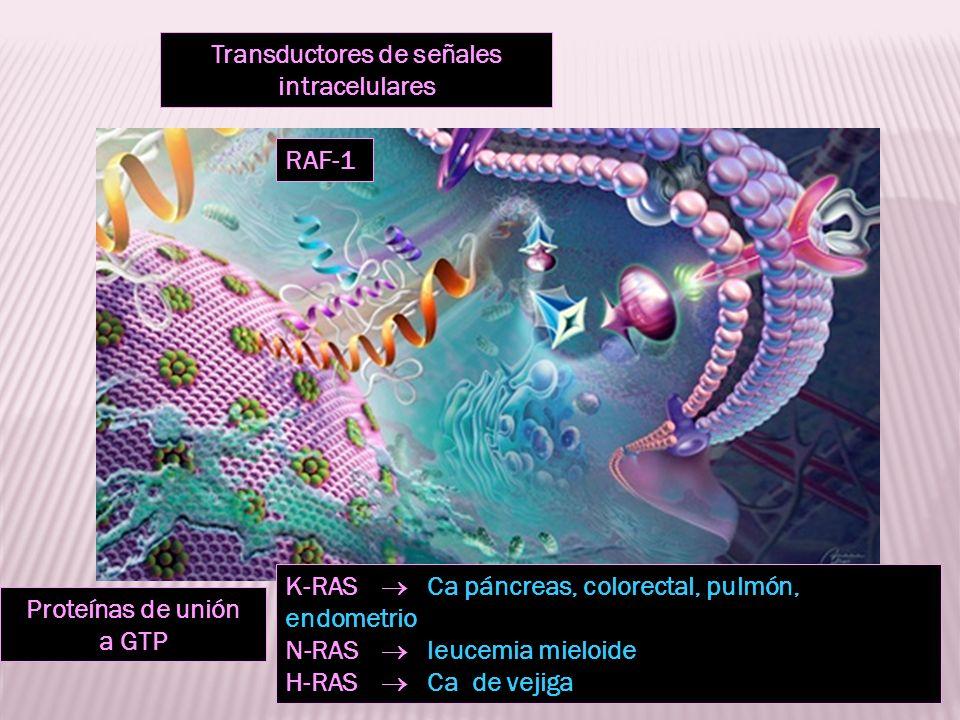 Transductores de señales intracelulares Proteínas de unión a GTP RAF-1 K-RAS Ca páncreas, colorectal, pulmón, endometrio N-RAS leucemia mieloide H-RAS