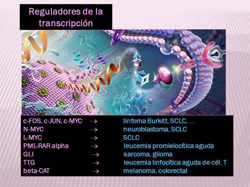 Reguladores de la transcripción c-FOS, c-JUN, c-MYC linfoma Burkitt, SCLC,... N-MYC neuroblastoma, SCLC L-MYC SCLC PML-RAR alpha leucemia promielocíti