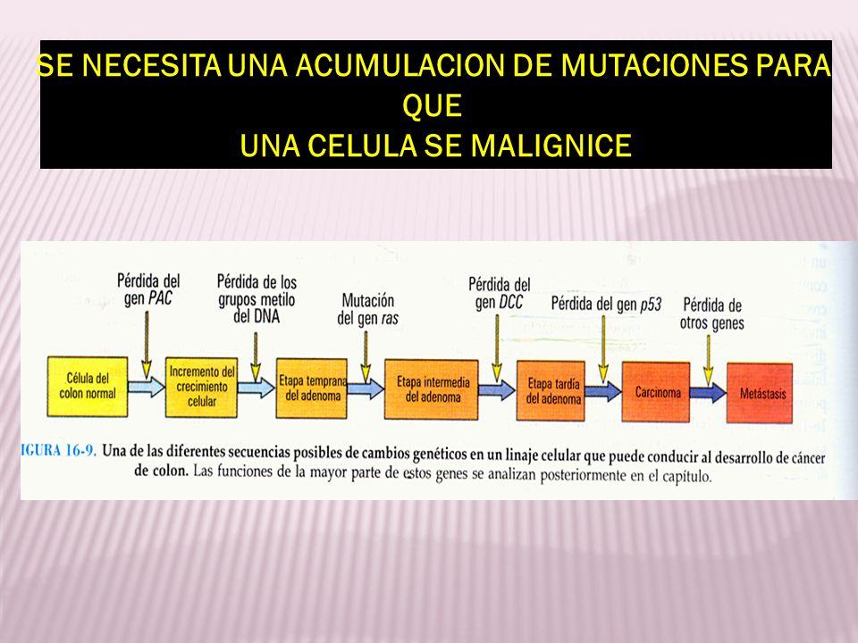 SE NECESITA UNA ACUMULACION DE MUTACIONES PARA QUE UNA CELULA SE MALIGNICE