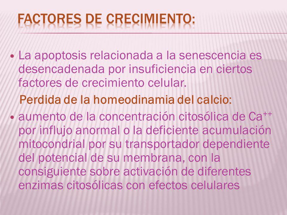 La apoptosis relacionada a la senescencia es desencadenada por insuficiencia en ciertos factores de crecimiento celular. Perdida de la homeodinamia de