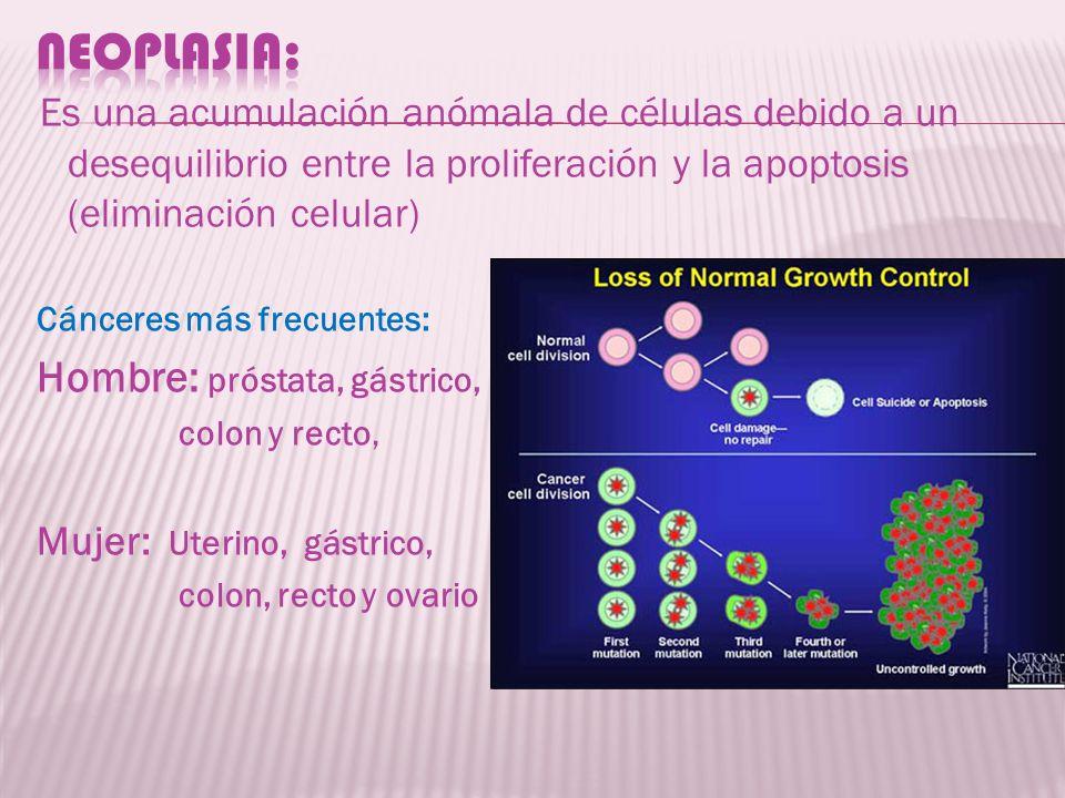 Es una acumulación anómala de células debido a un desequilibrio entre la proliferación y la apoptosis (eliminación celular) Cánceres más frecuentes: H