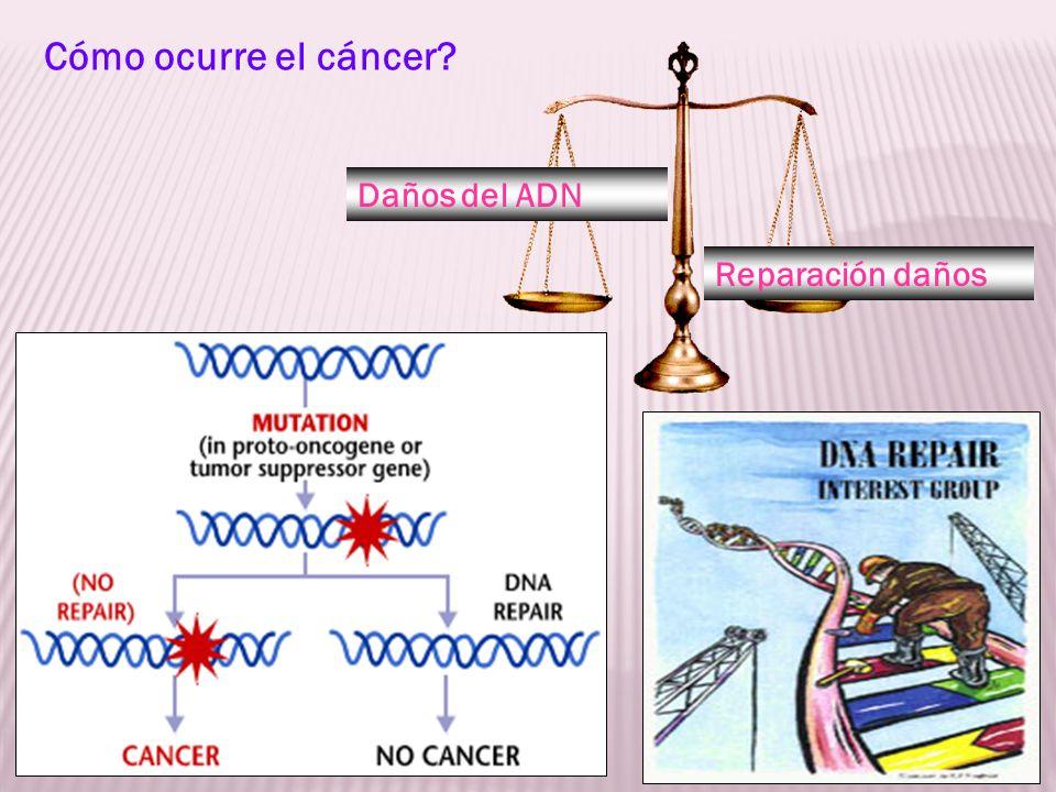 Daños del ADN Reparación daños Cómo ocurre el cáncer?