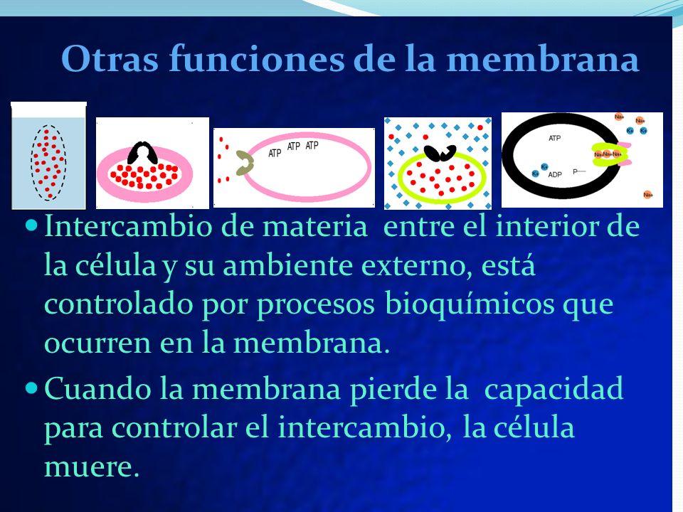 Intercambio de materia entre el interior de la célula y su ambiente externo, está controlado por procesos bioquímicos que ocurren en la membrana. Cuan