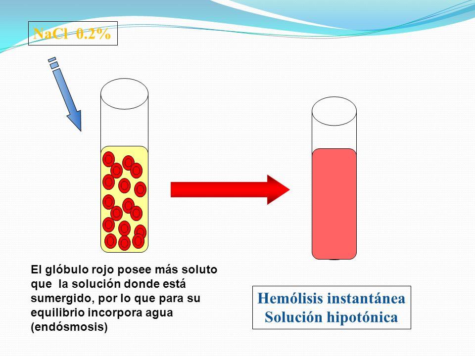NaCl 0.2% Hemólisis instantánea Solución hipotónica El glóbulo rojo posee más soluto que la solución donde está sumergido, por lo que para su equilibr