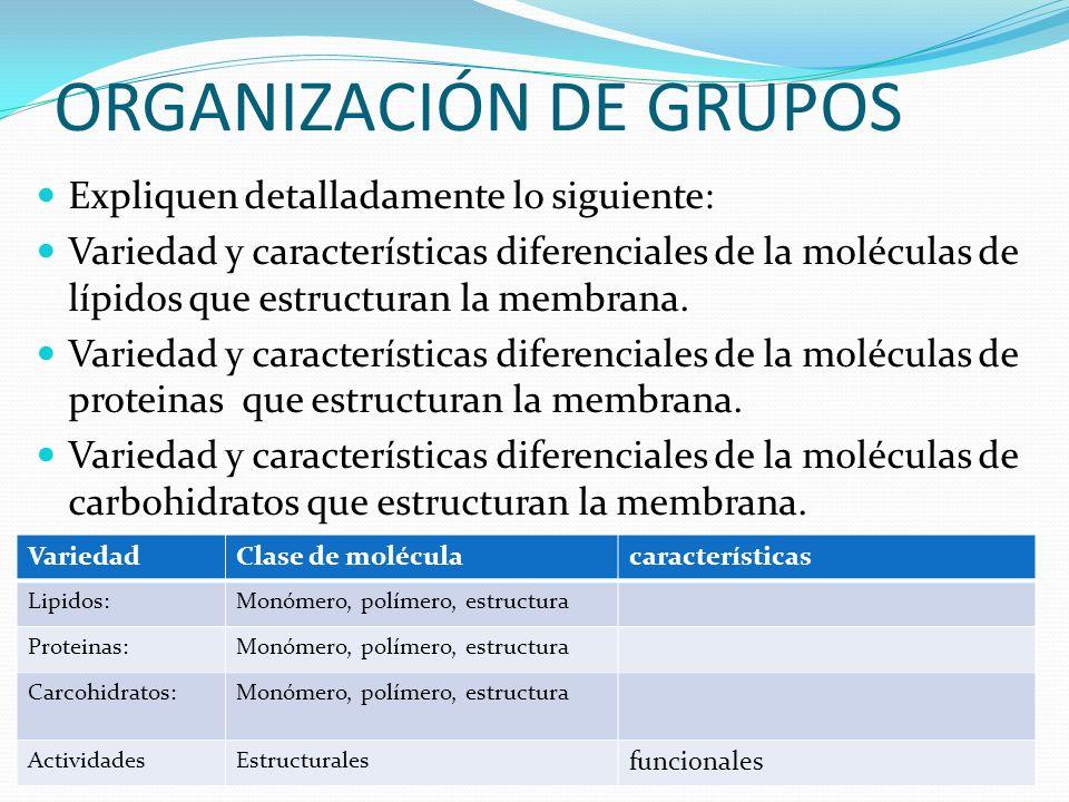 ORGANIZACIÓN DE GRUPOS Expliquen detalladamente lo siguiente: Variedad y características diferenciales de la moléculas de lípidos que estructuran la m