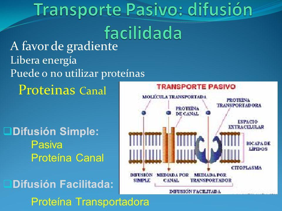 A favor de gradiente Libera energía Puede o no utilizar proteínas Proteinas Canal Difusión Simple: Pasiva Proteína Canal Difusión Facilitada: Proteína