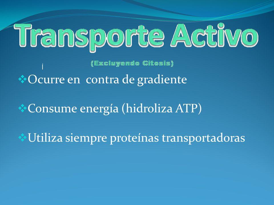 Ocurre en contra de gradiente Consume energía (hidroliza ATP) Utiliza siempre proteínas transportadoras