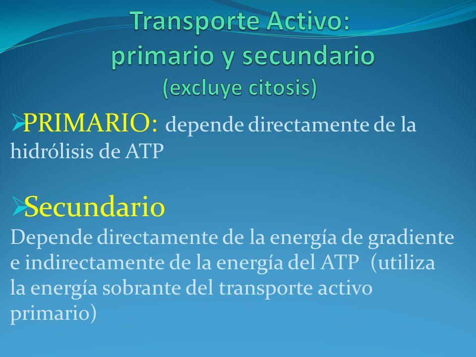 PRIMARIO: depende directamente de la hidrólisis de ATP Secundario Depende directamente de la energía de gradiente e indirectamente de la energía del A