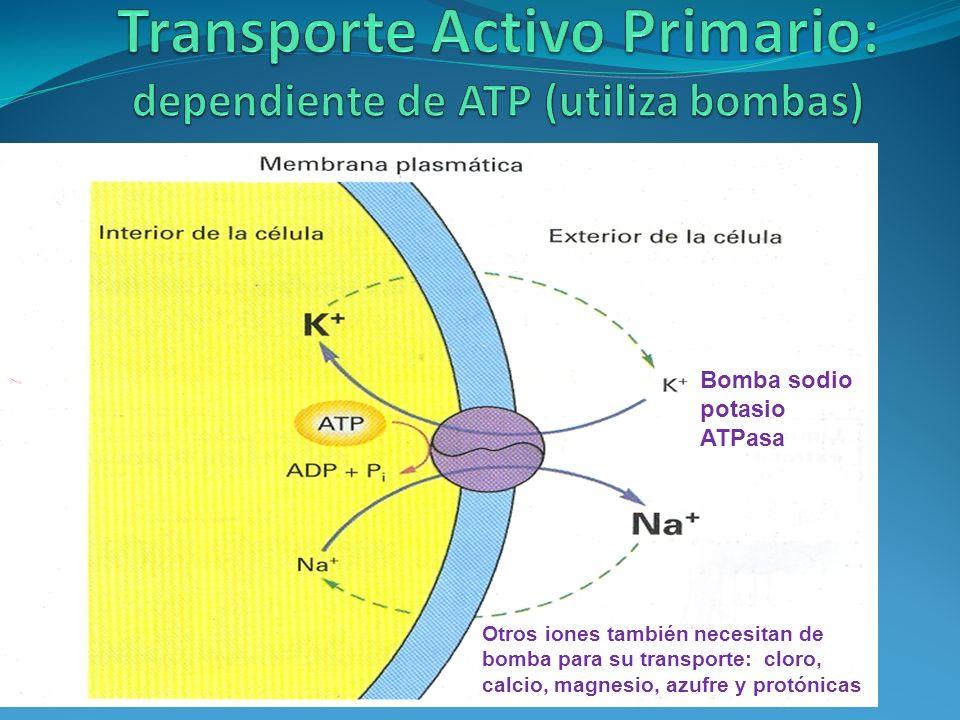 Bomba sodio potasio ATPasa Otros iones también necesitan de bomba para su transporte: cloro, calcio, magnesio, azufre y protónicas