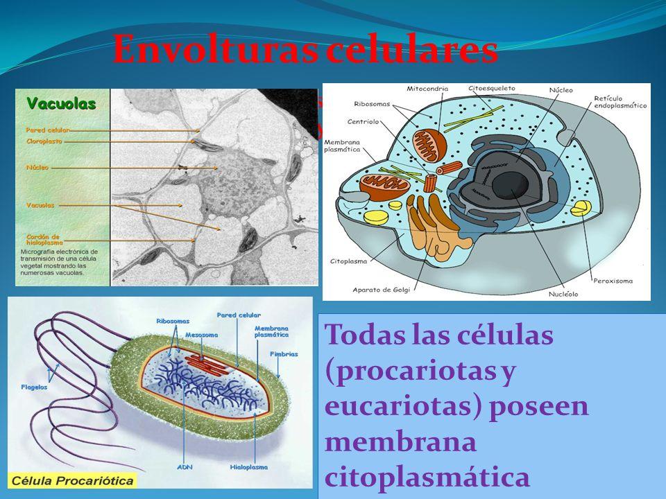 Todas las células procariotas y eucariotas, poseen Todas las células procariotas y eucariotas, poseen membrana plasmática embrana plasmática Todas las