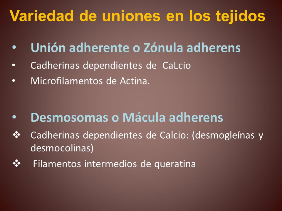Unión adherente o Zónula adherens Cadherinas dependientes de CaLcio Microfilamentos de Actina. Desmosomas o Mácula adherens Cadherinas dependientes de