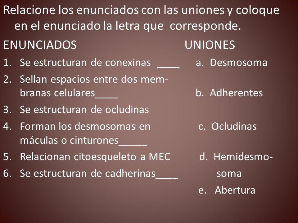 Relacione los enunciados con las uniones y coloque en el enunciado la letra que corresponde. ENUNCIADOS UNIONES 1.Se estructuran de conexinas ____ a.
