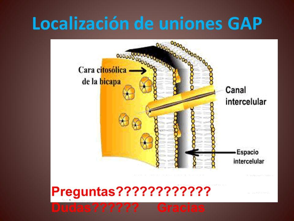 Localización de uniones GAP Preguntas???????????? Dudas?????? Gracias