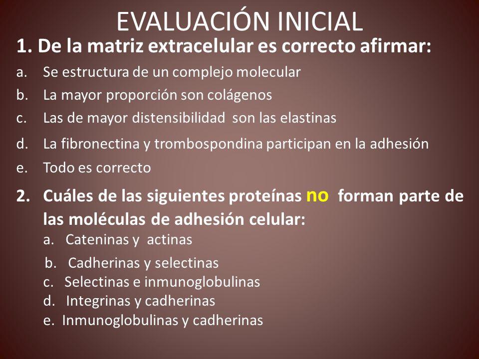EVALUACIÓN INICIAL 1. De la matriz extracelular es correcto afirmar: a.Se estructura de un complejo molecular b.La mayor proporción son colágenos c.La