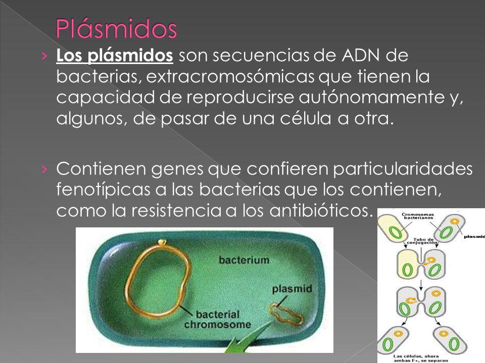 S on virus que infectan a las bacterias.