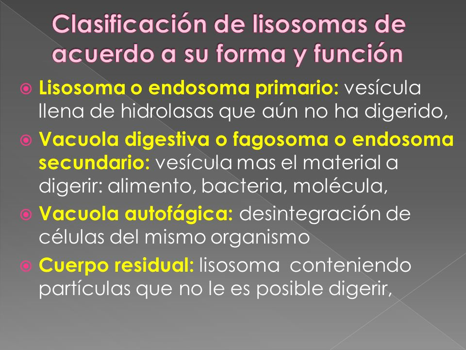 Lisosoma o endosoma primario: vesícula llena de hidrolasas que aún no ha digerido, Vacuola digestiva o fagosoma o endosoma secundario: vesícula mas el