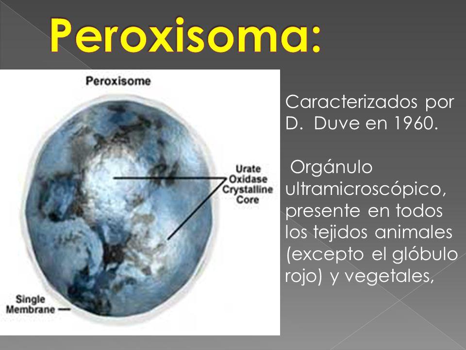 Caracterizados por D. Duve en 1960. Orgánulo ultramicroscópico, presente en todos los tejidos animales (excepto el glóbulo rojo) y vegetales,