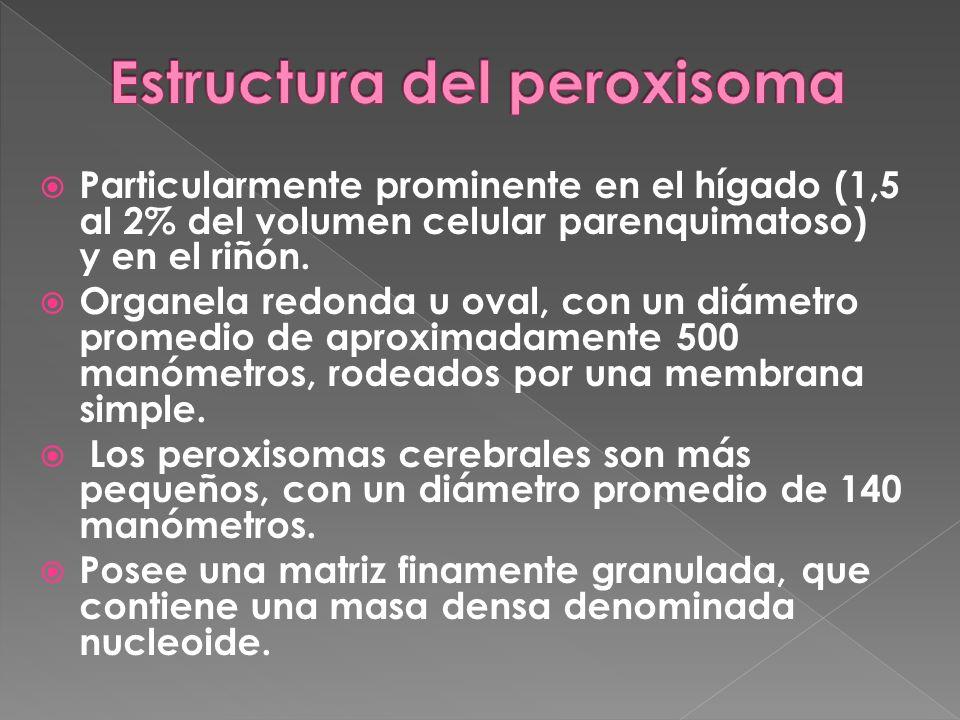 Particularmente prominente en el hígado (1,5 al 2% del volumen celular parenquimatoso) y en el riñón. Organela redonda u oval, con un diámetro promedi
