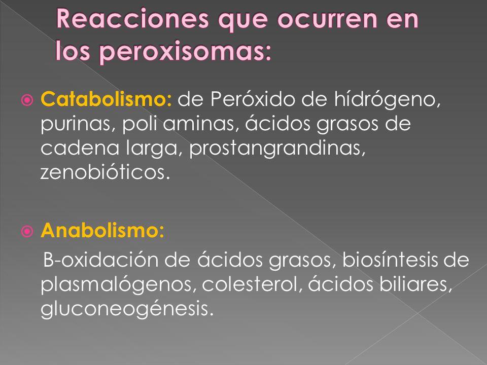 Catabolismo: de Peróxido de hídrógeno, purinas, poli aminas, ácidos grasos de cadena larga, prostangrandinas, zenobióticos. Anabolismo: B-oxidación de