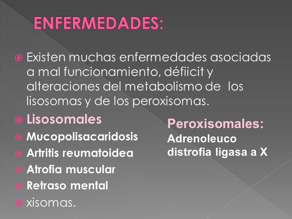 Existen muchas enfermedades asociadas a mal funcionamiento, défiicit y alteraciones del metabolismo de los lisosomas y de los peroxisomas. Lisosomales