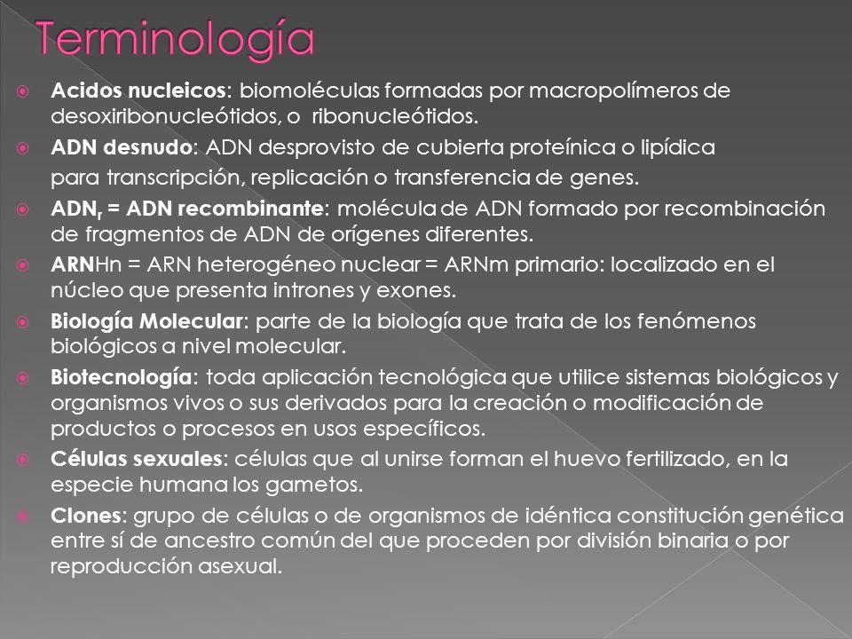 Acidos nucleicos : biomoléculas formadas por macropolímeros de desoxiribonucleótidos, o ribonucleótidos. ADN desnudo : ADN desprovisto de cubierta pro