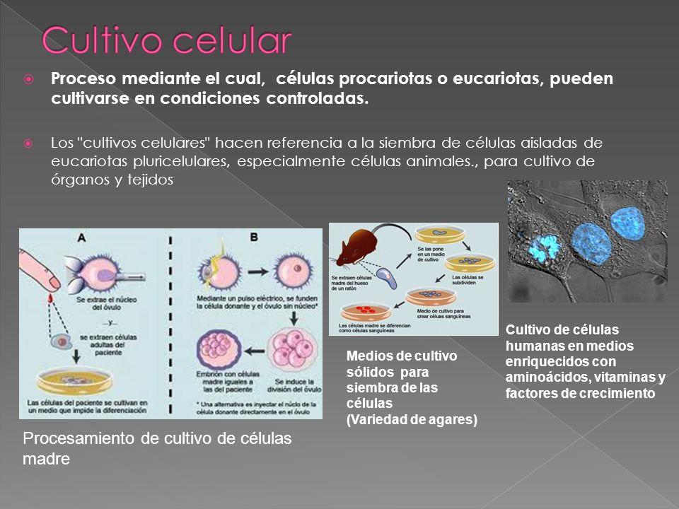 Proceso mediante el cual, células procariotas o eucariotas, pueden cultivarse en condiciones controladas. Los