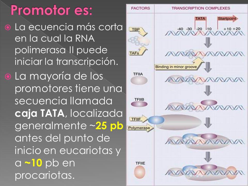 La ecuencia más corta en la cual la RNA polimerasa II puede iniciar la transcripción. La mayoría de los promotores tiene una secuencia llamada caja TA