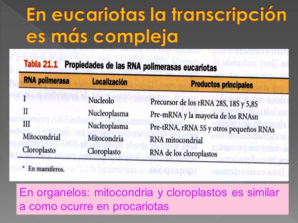 En organelos: mitocondria y cloroplastos es similar a como ocurre en procariotas