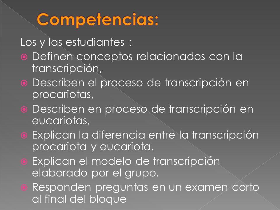 Los y las estudiantes : Definen conceptos relacionados con la transcripción, Describen el proceso de transcripción en procariotas, Describen en proces