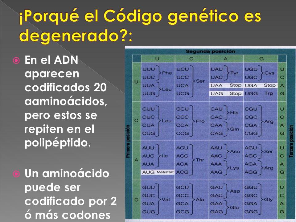 En el ADN aparecen codificados 20 aaminoácidos, pero estos se repiten en el polipéptido. Un aminoácido puede ser codificado por 2 ó más codones