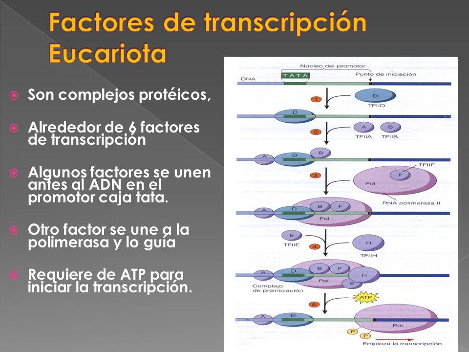 Son complejos protéicos, Alrededor de 6 factores de transcripción Algunos factores se unen antes al ADN en el promotor caja tata. Otro factor se une a