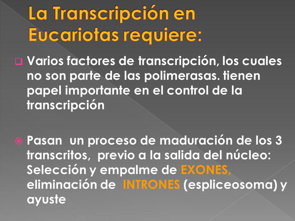Varios factores de transcripción, los cuales no son parte de las polimerasas. tienen papel importante en el control de la transcripción Pasan un proce
