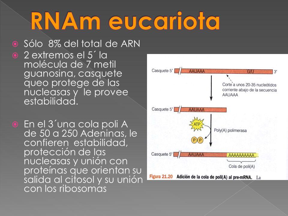 Sólo 8% del total de ARN 2 extremos el 5´ la molécula de 7 metil guanosina, casquete queo protege de las nucleasas y le provee estabilidad. En el 3´un