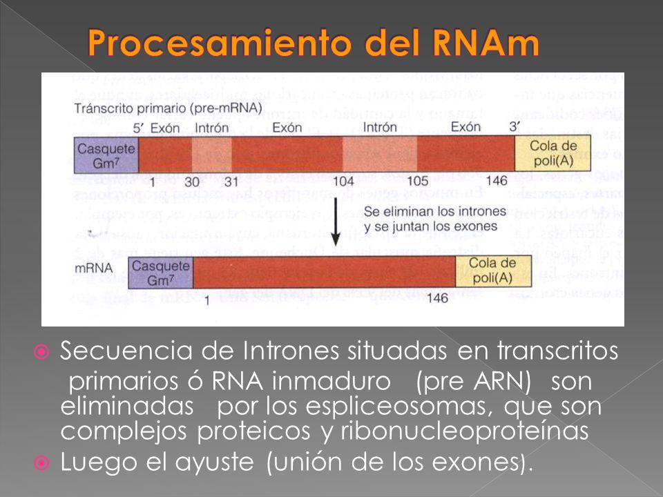 Secuencia de Intrones situadas en transcritos primarios ó RNA inmaduro (pre ARN) son eliminadas por los espliceosomas, que son complejos proteicos y r