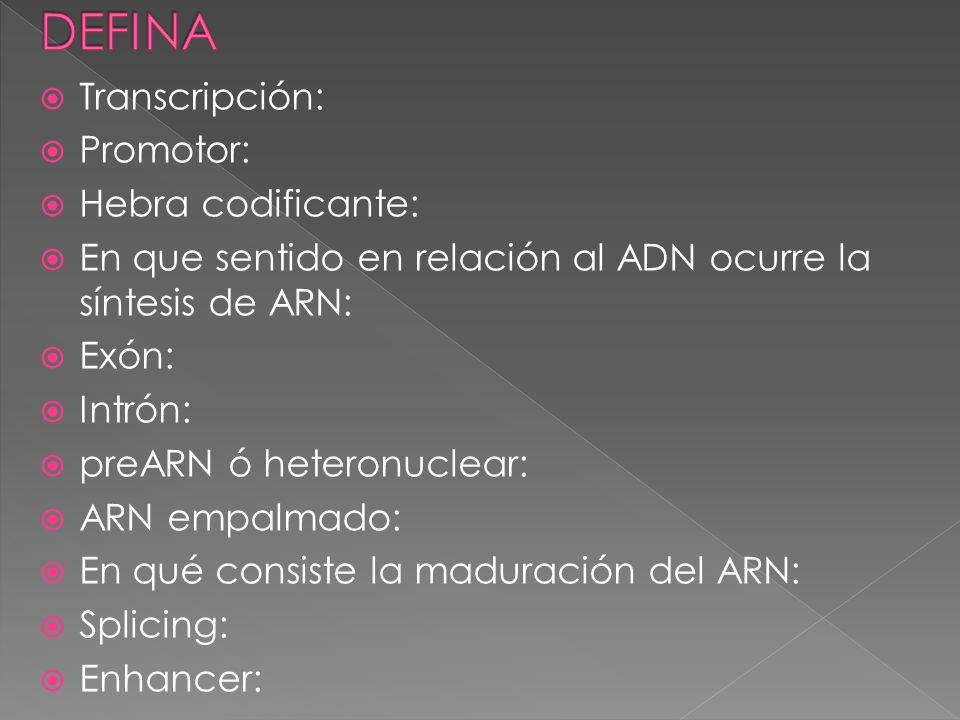 Transcripción: Promotor: Hebra codificante: En que sentido en relación al ADN ocurre la síntesis de ARN: Exón: Intrón: preARN ó heteronuclear: ARN emp