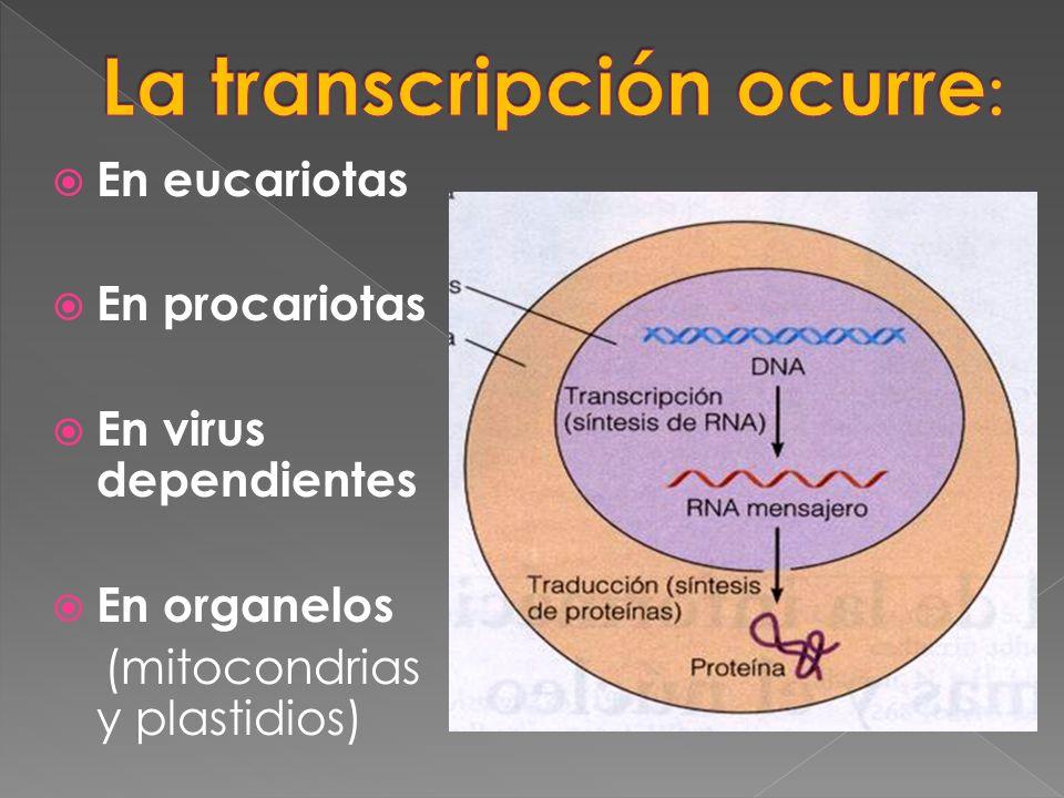 En eucariotas En procariotas En virus dependientes En organelos (mitocondrias y plastidios)