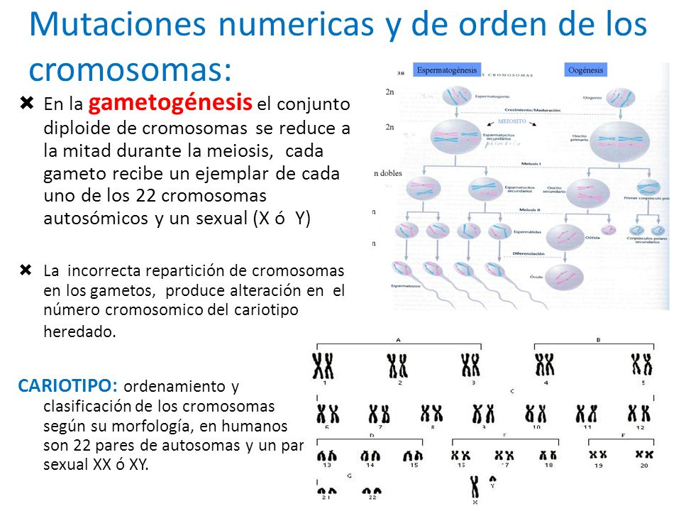 Mutaciones numericas y de orden de los cromosomas: En la gametogénesis el conjunto diploide de cromosomas se reduce a la mitad durante la meiosis, cad