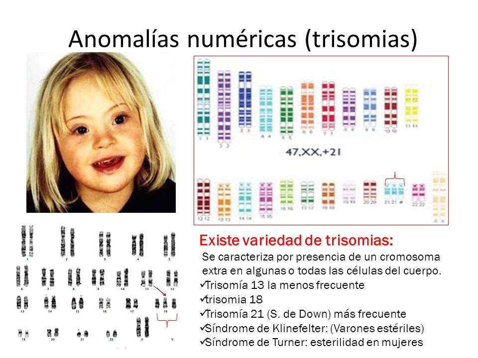 Anomalías numéricas (trisomias) Existe variedad de trisomias: Se caracteriza por presencia de un cromosoma extra en algunas o todas las células del cu