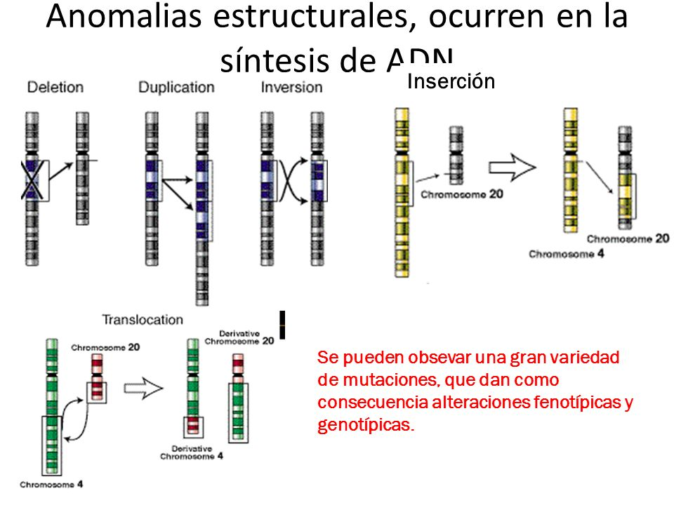 Anomalias estructurales, ocurren en la síntesis de ADN Inserción Se pueden obsevar una gran variedad de mutaciones, que dan como consecuencia alteraci