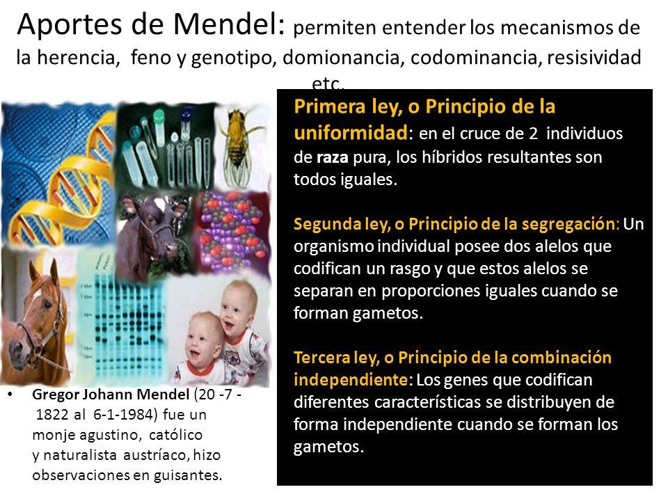 Aportes de Mendel: permiten entender los mecanismos de la herencia, feno y genotipo, domionancia, codominancia, resisividad etc. Gregor Johann Mendel