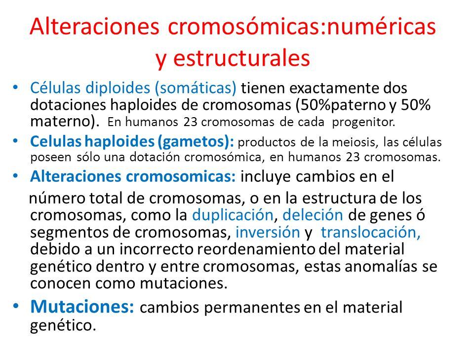 Mutaciones numericas y de orden de los cromosmicomas: En la gametogénesis el conjunto diploide de cromosomas se reduce a la mitad durante la meiosis, cada gameto recibe un ejemplar de cada uno de los 22 cromosomas autosómicos y un sexual (X ó Y) La incorrecta repartición de cromosomas en los gametos, produce alteración en el número cromosomico del cariotipo heredado.