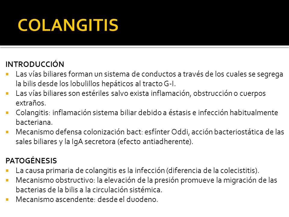 INTRODUCCIÓN Las vías biliares forman un sistema de conductos a través de los cuales se segrega la bilis desde los lobulillos hepáticos al tracto G-I.