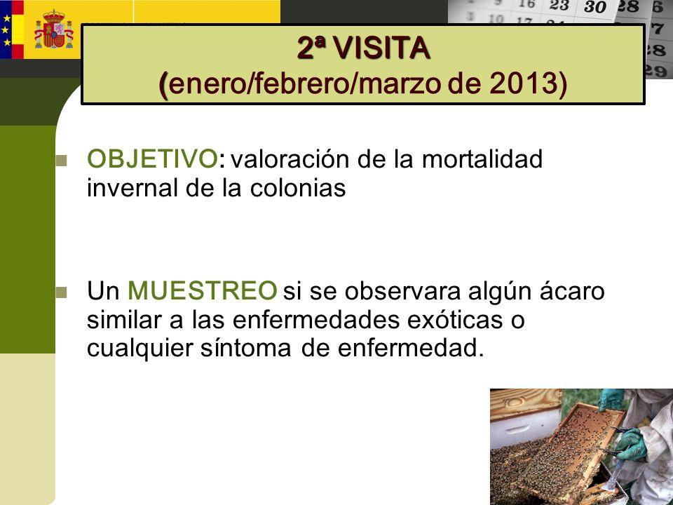 OBJETIVO: valoración de la mortalidad invernal de la colonias Un MUESTREO si se observara algún ácaro similar a las enfermedades exóticas o cualquier
