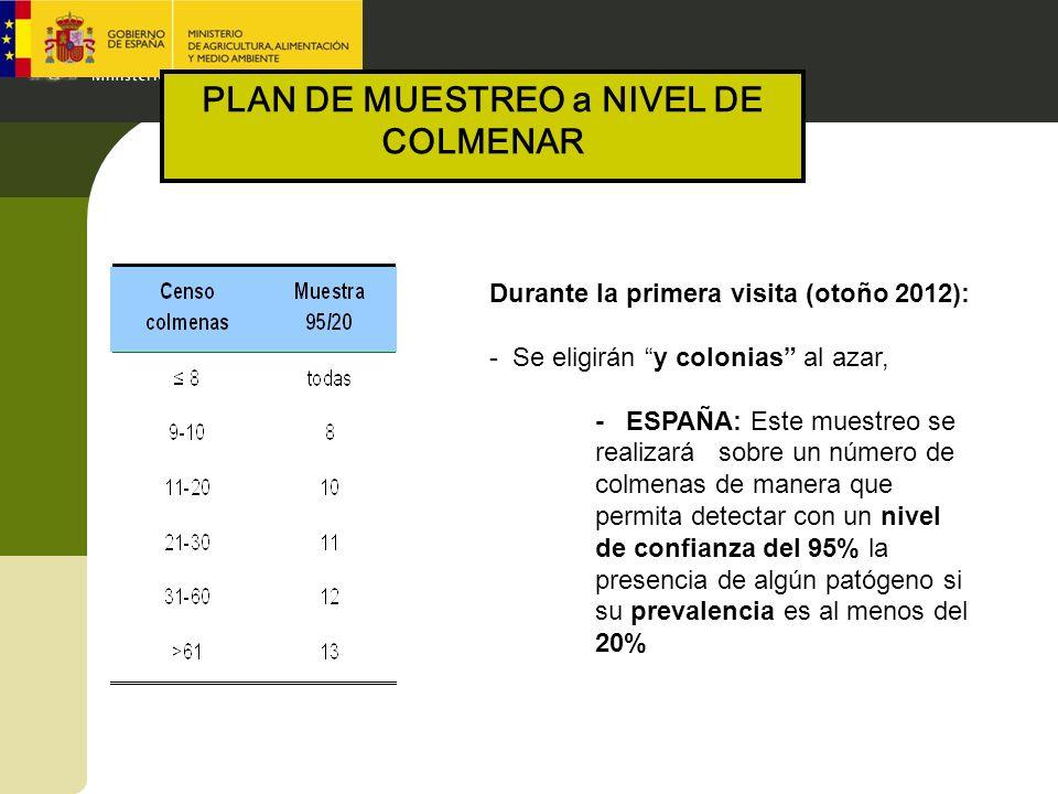 Durante la primera visita (otoño 2012): - Se eligirán y colonias al azar, - ESPAÑA: Este muestreo se realizará sobre un número de colmenas de manera q