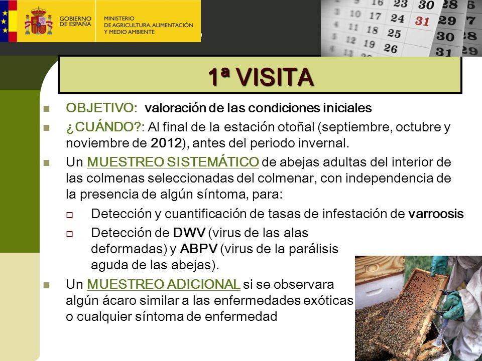 1ª VISITA OBJETIVO: valoración de las condiciones iniciales ¿CUÁNDO?: Al final de la estación otoñal (septiembre, octubre y noviembre de 2012), antes