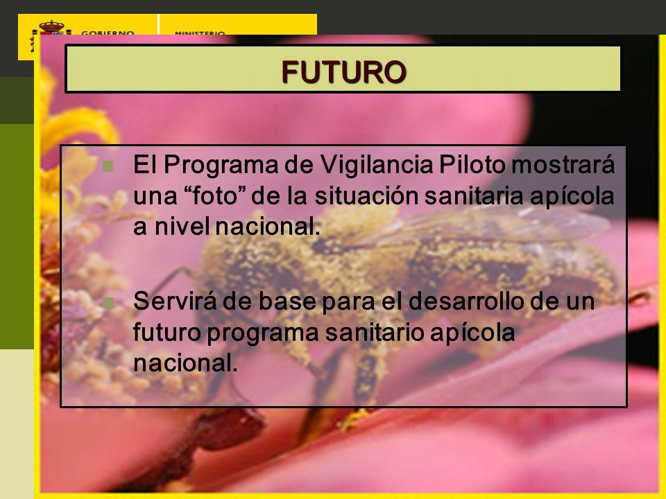 FUTURO El Programa de Vigilancia Piloto mostrará una foto de la situación sanitaria apícola a nivel nacional. Servirá de base para el desarrollo de un